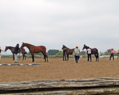 Braecrest Farm Horse Show